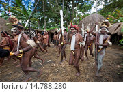 Купить «, group of Dani warriors leaving the village for a military expedition, Indonesia, Western New Guinea, Baliem Valley», фото № 14788280, снято 19 июня 2011 г. (c) age Fotostock / Фотобанк Лори