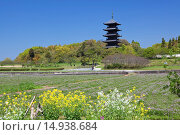 Купить «Lotus field, rape blossoms, Bitchu Kokubu temple, Five-Storied Pagoda, Soja, Okayama, Sanyo, Japan», фото № 14938684, снято 19 марта 2019 г. (c) age Fotostock / Фотобанк Лори