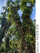 Купить «The jungles found along the Road to Hana in Maui, Hawaii.», фото № 14978516, снято 16 февраля 2019 г. (c) age Fotostock / Фотобанк Лори