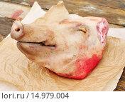 Купить «Голова свиньи на бумаге», фото № 14979004, снято 8 сентября 2013 г. (c) Татьяна Ворона / Фотобанк Лори