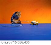 Computer Mouse and Cat. Стоковое фото, фотограф Pete McArthur / age Fotostock / Фотобанк Лори