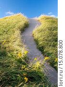 Купить «Sand Dunes Brackley Beach - Prince Edward Island, Canada.», фото № 15078800, снято 19 сентября 2014 г. (c) age Fotostock / Фотобанк Лори