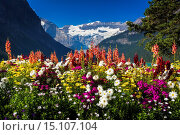 Купить «Flowers at Lake Louise under Mount Victoria, Banff National Park, Alberta, Canada.», фото № 15107104, снято 21 мая 2019 г. (c) age Fotostock / Фотобанк Лори