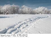 Купить «Зима. Иней. Дорога. Лес», фото № 15175012, снято 13 ноября 2019 г. (c) Дмитрий Третьяков / Фотобанк Лори