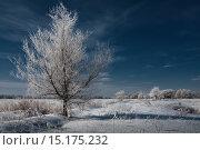 Купить «Зима. Иней. Дерево», фото № 15175232, снято 20 ноября 2017 г. (c) Дмитрий Третьяков / Фотобанк Лори