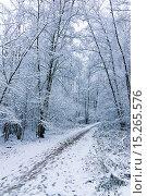 Купить «Москва. Зима. Тропинка в Измайловском парке», фото № 15265576, снято 22 ноября 2015 г. (c) Зобков Георгий / Фотобанк Лори