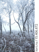 Зимний туманный пейзаж. Стоковое фото, фотограф Бочкарева Лариса / Фотобанк Лори