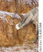 Купить «Лошадь ест сено в стогу», фото № 15430044, снято 27 июня 2019 г. (c) Музыка Анна / Фотобанк Лори