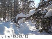 Купить «Ворота в сказку. Зимний лес, тропа, солнечный зимний день, снежный сугроб на березе... Природный парк Таганай», фото № 15695112, снято 10 марта 2013 г. (c) Юрий Карачев / Фотобанк Лори