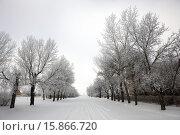 Купить «snow covered street in small rural farming community village Forget Saskatchewan Canada.», фото № 15866720, снято 15 декабря 2012 г. (c) age Fotostock / Фотобанк Лори