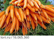 Купить «carrot (Daucus carota subsp. sativus, Daucus carota var. sativus), some bunches of carrots», фото № 16065360, снято 7 октября 2014 г. (c) age Fotostock / Фотобанк Лори