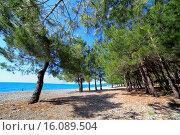 Купить «Black sea coast, Pitsunda, Abkhazia, Georgia.», фото № 16089504, снято 4 июня 2014 г. (c) age Fotostock / Фотобанк Лори