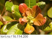 Купить «Florida, USA - Gene Joyner´s Unbelievable Acres Botanic Garden, Joyner is a Palm Beach County Extension agent.», фото № 16114200, снято 4 февраля 2004 г. (c) age Fotostock / Фотобанк Лори