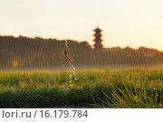 Купить «Japan, San'yo Region, Okayama Prefecture, Soja, Spider web.», фото № 16179784, снято 21 августа 2018 г. (c) age Fotostock / Фотобанк Лори
