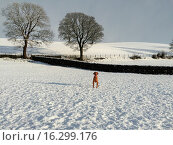 Купить «Parts of Northern England experience heavy snowfall on the first day of spring. Many holiday parks opened for the first weekend of the season but hamlets...», фото № 16299176, снято 1 марта 2015 г. (c) age Fotostock / Фотобанк Лори