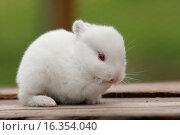 Купить «young rabbit», фото № 16354040, снято 13 июля 2008 г. (c) age Fotostock / Фотобанк Лори