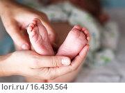 Купить «Босые ножки новорожденного в женских руках», фото № 16439564, снято 24 марта 2019 г. (c) Mikhail Starodubov / Фотобанк Лори
