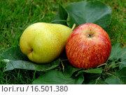 Apfel und Birne. Стоковое фото, фотограф Elke Ursula Deja-schn / easy Fotostock / Фотобанк Лори