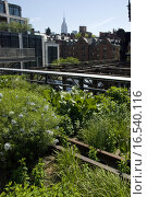 Купить «high line park in new york city», фото № 16540116, снято 23 мая 2019 г. (c) PantherMedia / Фотобанк Лори