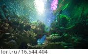 Купить «Акула в океанариуме», эксклюзивный видеоролик № 16544404, снято 8 ноября 2015 г. (c) Литвяк Игорь / Фотобанк Лори