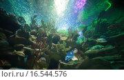 Купить «Акула плавает в аквариуме океанариума», эксклюзивный видеоролик № 16544576, снято 8 ноября 2015 г. (c) Литвяк Игорь / Фотобанк Лори