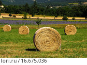 Купить «Round hay bales on a mowed meadow», фото № 16675036, снято 21 ноября 2018 г. (c) easy Fotostock / Фотобанк Лори