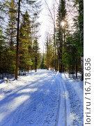Лыжня в зимнем лесу. Лучи солнца пробиваются сквозь ветви деревьев. Стоковое фото, фотограф Евгений Ткачёв / Фотобанк Лори
