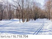 Купить «Лыжня в зимнем лесу», фото № 16718704, снято 1 марта 2015 г. (c) Евгений Ткачёв / Фотобанк Лори