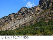 Вершина петух. Стоковое фото, фотограф Надежда Шапкина / Фотобанк Лори