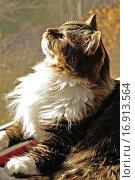 Купить «Пушистый кот лежит на подоконнике», фото № 16913564, снято 17 июня 2019 г. (c) Зезелина Марина / Фотобанк Лори
