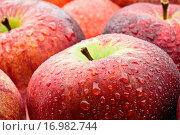 Äpfel nass........ Стоковое фото, фотограф Heiko Eschrich / easy Fotostock / Фотобанк Лори