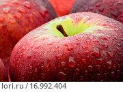 Äpfel nass.......... Стоковое фото, фотограф Heiko Eschrich / easy Fotostock / Фотобанк Лори