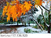 Купить «Park and first snow», фото № 17136920, снято 17 февраля 2020 г. (c) easy Fotostock / Фотобанк Лори