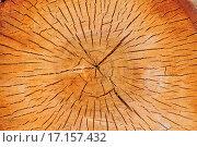 Купить «Срез ствола березы. Фон», фото № 17157432, снято 28 мая 2012 г. (c) Евгений Суворов / Фотобанк Лори
