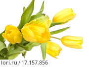 Букет желтых тюльпанов. Стоковое фото, фотограф Оксана Якупова / Фотобанк Лори