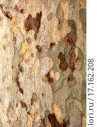 Купить «Texture of wood», фото № 17162208, снято 22 июня 2018 г. (c) easy Fotostock / Фотобанк Лори