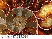 Купить «Ammolite», фото № 17215520, снято 17 октября 2018 г. (c) easy Fotostock / Фотобанк Лори