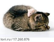 Child cat and grey mouse. Стоковое фото, фотограф Przemyslaw / easy Fotostock / Фотобанк Лори
