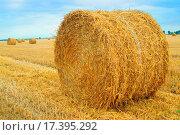 Купить «Field with straw bales», фото № 17395292, снято 16 октября 2018 г. (c) easy Fotostock / Фотобанк Лори