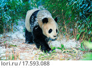 Купить «Picture from the wild», фото № 17593088, снято 16 июля 2018 г. (c) easy Fotostock / Фотобанк Лори