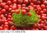 Купить «Клюква и мох», фото № 17594976, снято 16 сентября 2014 г. (c) LightLada / Фотобанк Лори