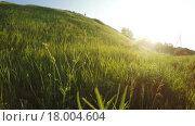Купить «Весенняя поляна», видеоролик № 18004604, снято 21 мая 2015 г. (c) Потийко Сергей / Фотобанк Лори