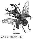 Stag Beetle Isolated on White. Стоковое фото, фотограф Joseph Rivera / easy Fotostock / Фотобанк Лори