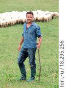 Купить «Shepherd in field», фото № 18295256, снято 24 января 2019 г. (c) easy Fotostock / Фотобанк Лори