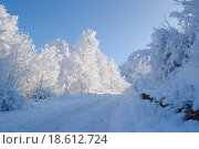 Зимний лес. Стоковое фото, фотограф Марина Остапенко / Фотобанк Лори