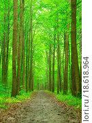 Купить «forest», фото № 18618964, снято 23 марта 2019 г. (c) easy Fotostock / Фотобанк Лори