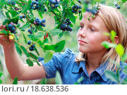 Купить «Blonde Girl Picking Blueberries», фото № 18638536, снято 18 августа 2018 г. (c) easy Fotostock / Фотобанк Лори