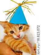 Купить «Kitten with hat», фото № 18823072, снято 26 июня 2019 г. (c) easy Fotostock / Фотобанк Лори