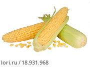 Купить «Fresh raw corn cobs isolated on the white background», фото № 18931968, снято 11 октября 2015 г. (c) Наталья Волкова / Фотобанк Лори