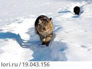 Купить «Die Verfolgung durch den Schnee», фото № 19043156, снято 15 ноября 2018 г. (c) easy Fotostock / Фотобанк Лори